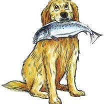 Ryby dla psa