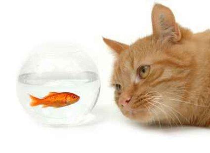 akwarium i kot