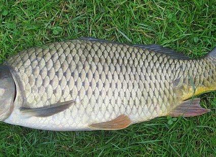 Czyszczenie ryby