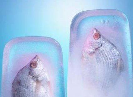 przechowywanie ryb