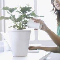 podlewanie kwiatów doniczkowych