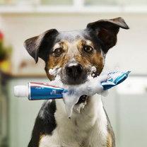 pies z pastą do zębów