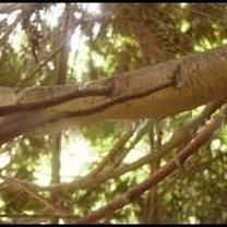 ścinanie gałęzi 1