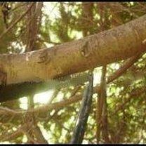 ścinanie gałęzi 2