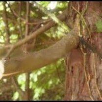 przycinanie drzewek