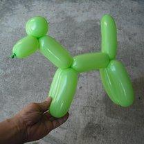pies z balona