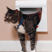 drzwi dla kota