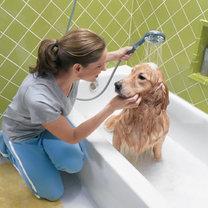 kąpiel dużego psa