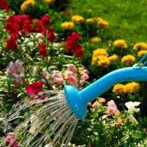 Jak dbać o kwiaty podczas upałów?