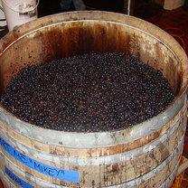 domowy wyrób wina