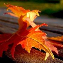 zdjęcie jesieni