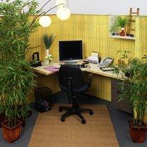Rośliny w biurze