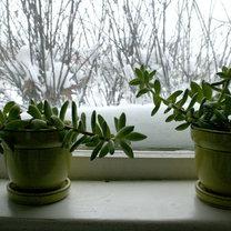 rośliny domowe zimą