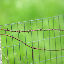 sposoby na sarny w ogrodzie - krok 6