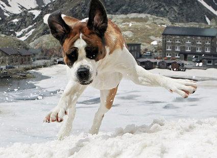 pies bawi się na śniegu