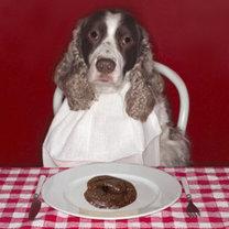 pies je odchody i kupy?