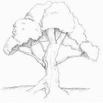 rysunek drzewa
