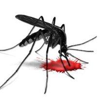 komar krwiopijca