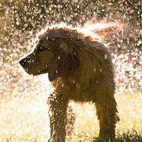 pies w upalny dzień