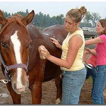pielęgnacja konia