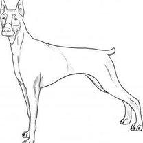 rysowanie psa - krok 5.
