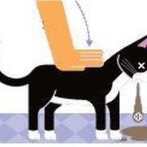 Kot - pierwsza pomoc w przypadku zadławienia 4