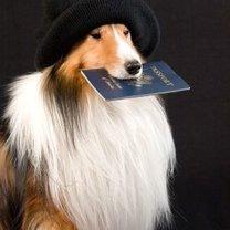 Pies z paszportem