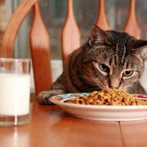 Kot je z talerza