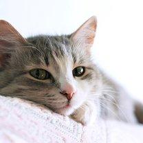 kot apatyczny
