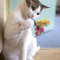 Kot bawiący się piórkiem