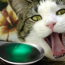 Podawanie kotu lekarstwa