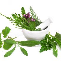 szałwia i inne zioła
