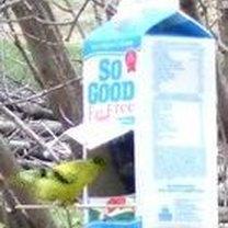Karmnik dla ptaków z kartonu