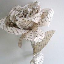 róża z gazety