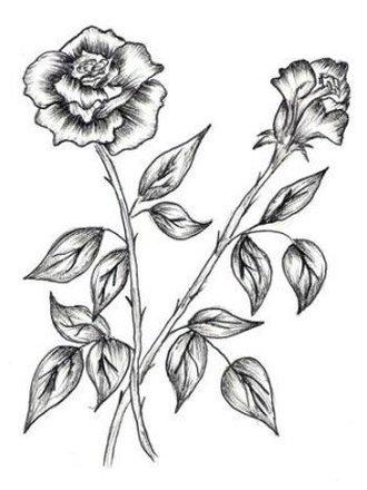 Jak narysowa r porada for How to draw a rose bush step by step