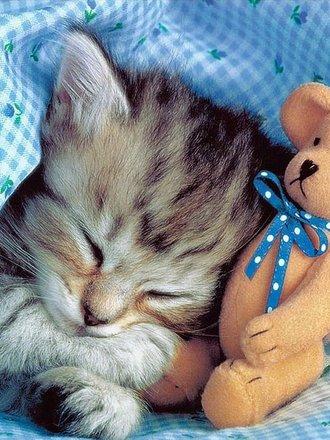 Chory kot w łóżku
