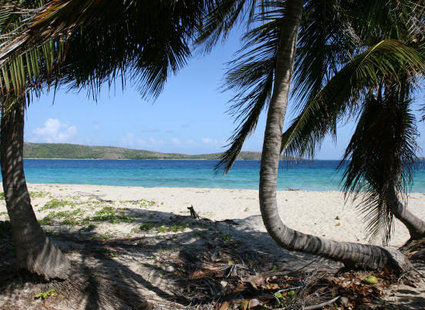 zdjęcie plaży z palmami