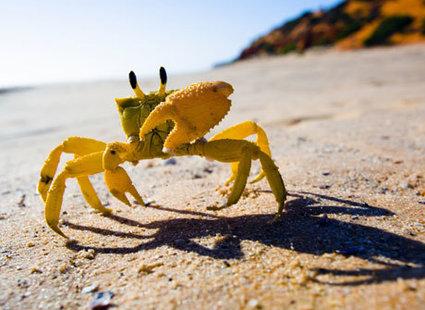 zdjęcie na plaży - krab