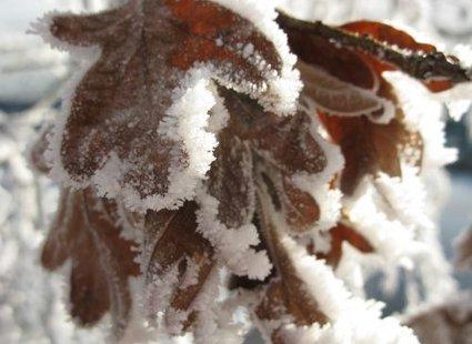 śnieg na liściu