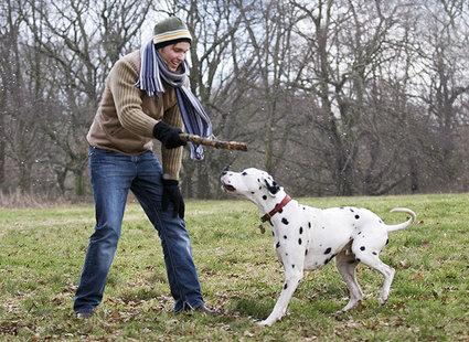 Aportowanie psa