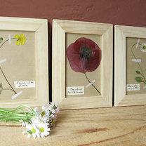 Domowe herbarium