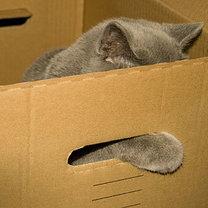 pudełko dla kota