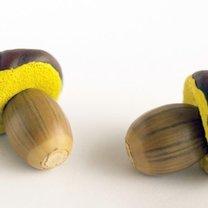 grzyby z kasztanów