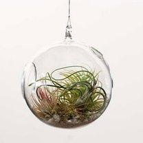 wiszące terrarium