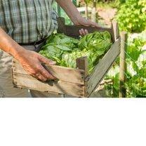 dieta na metabolizm - zielone warzywa