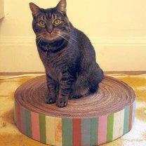 Mata dla kota z kartonu