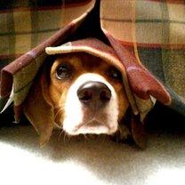 Pozwól psu się ukryć