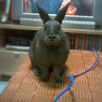 Zabezpieczenie kabli przed królikiem