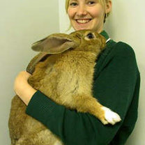 Noszenie królika