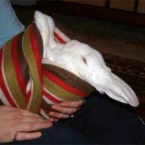 Obcinanie pazurków królikowi